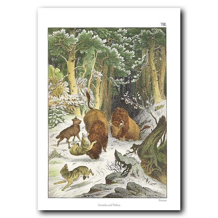 Fine art print for sale. Wolves & Aurochs In The Snow