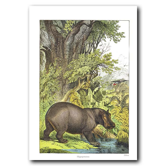 Fine art print for sale. Hippo, Monkey And Grey Parrot