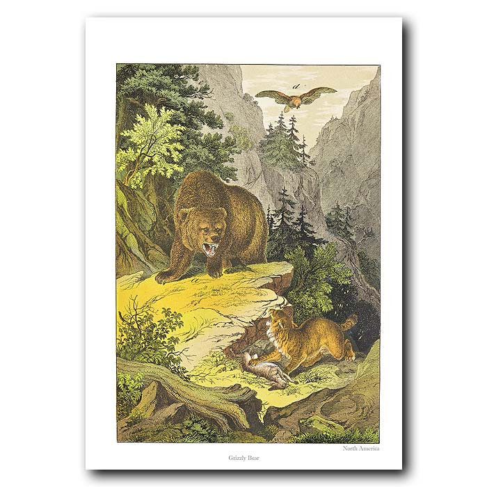 Fine art print for sale. Grizzly Bear In The Forest