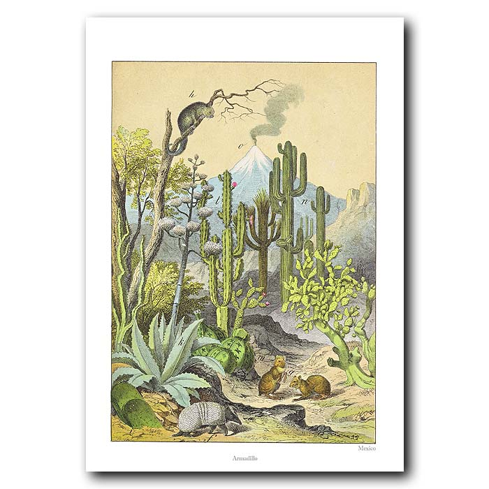 Fine art print for sale. Agave, Cacti & Volcano In Mexico