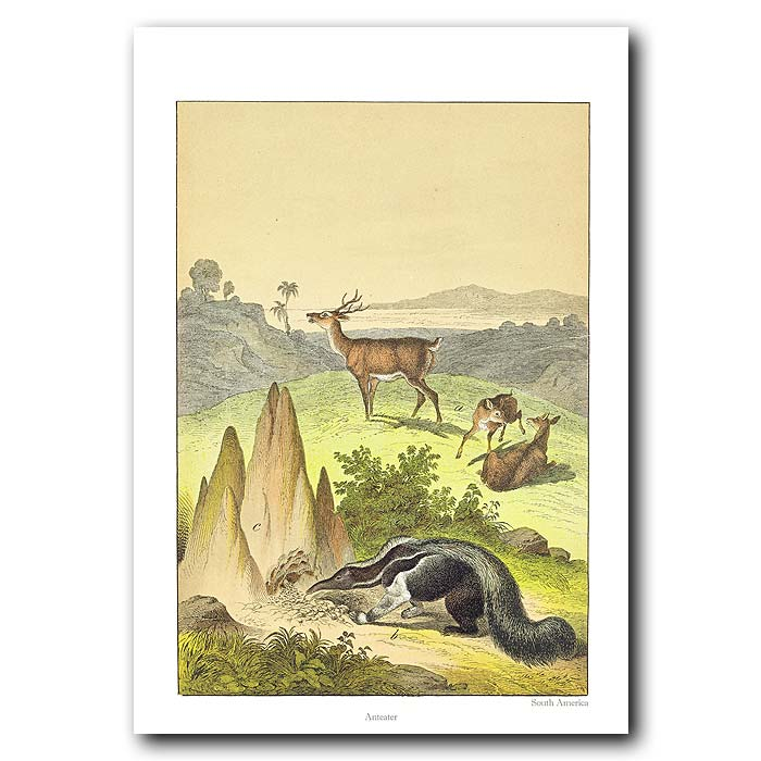 Fine art print for sale. Anteater In South America