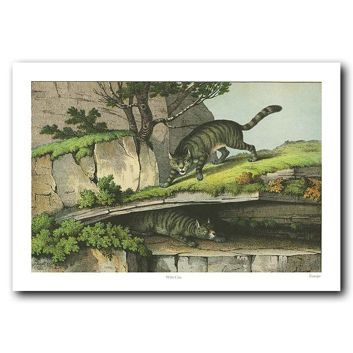 Fine art print for sale. Wild Cats In The Mountains