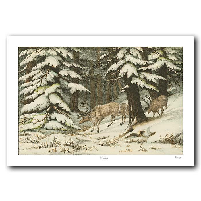 Fine art print for sale. Reindeer In The Snow