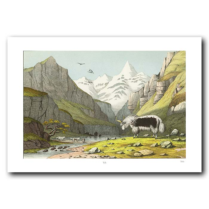 Fine art print for sale. Yak In The Mountains