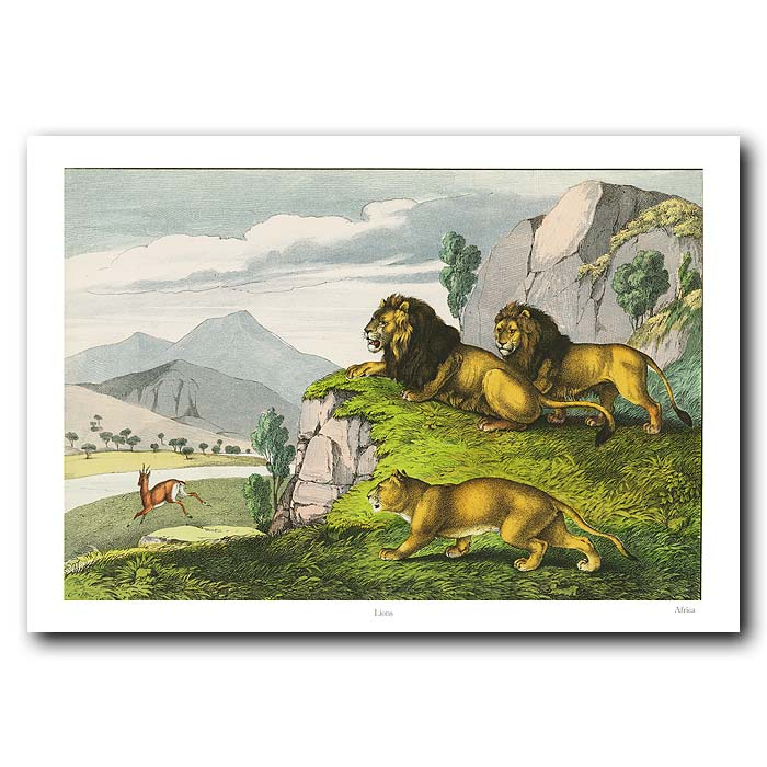 Fine art print for sale. Lion In The African Bush