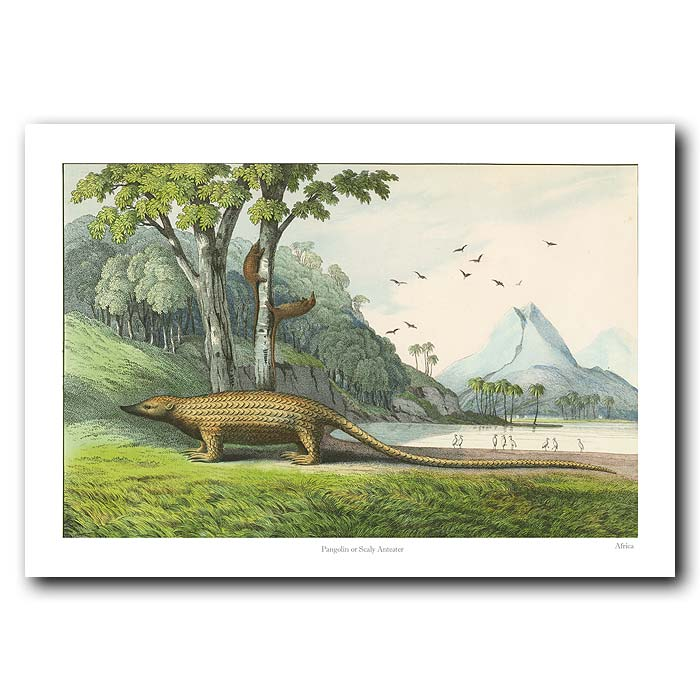 Fine art print for sale. Pangolin Or Scaly Anteater.
