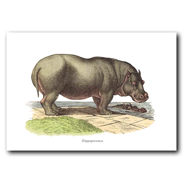 Fine art print for sale. Hippo On A River Bank