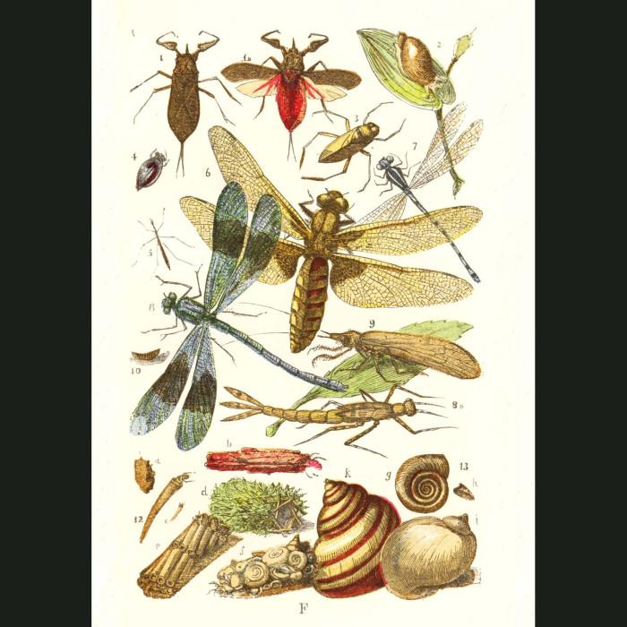 Fine art print for sale. Dragonflies