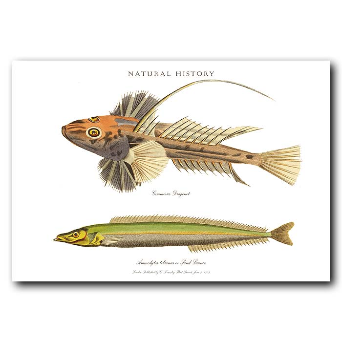 Fine art print for sale. Dragonet & Sand Launce Fish