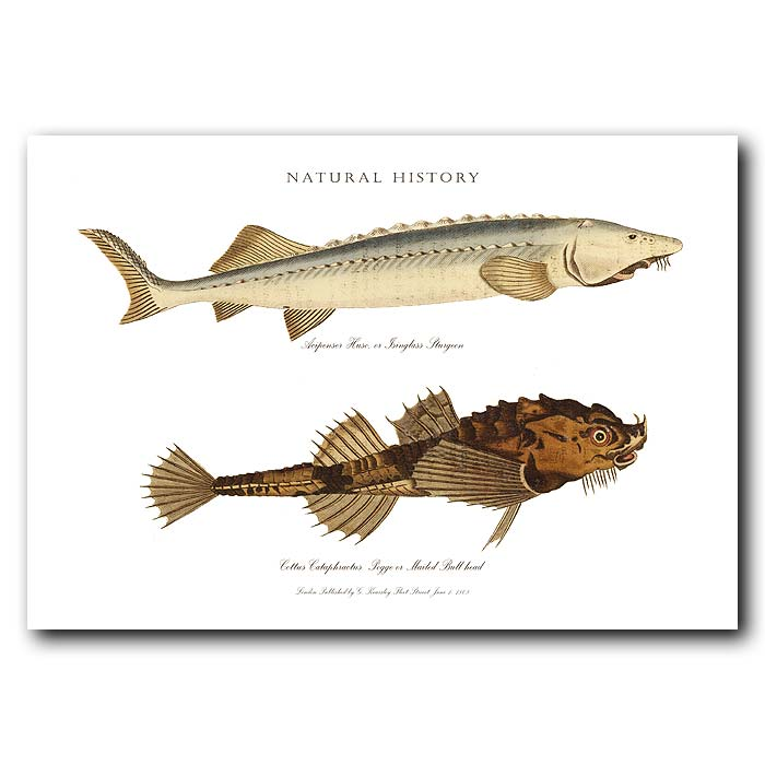 Fine art print for sale. Sturgeon & Bull-Head Fish