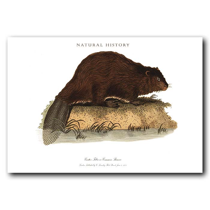 Fine art print for sale. Common Beaver