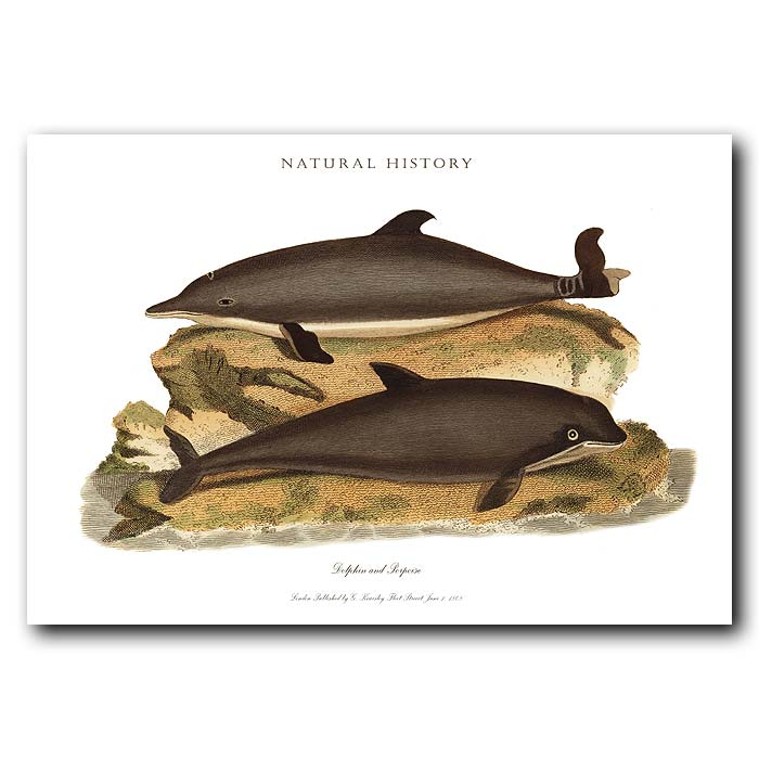 Fine art print for sale. Dolphin & Porpoise