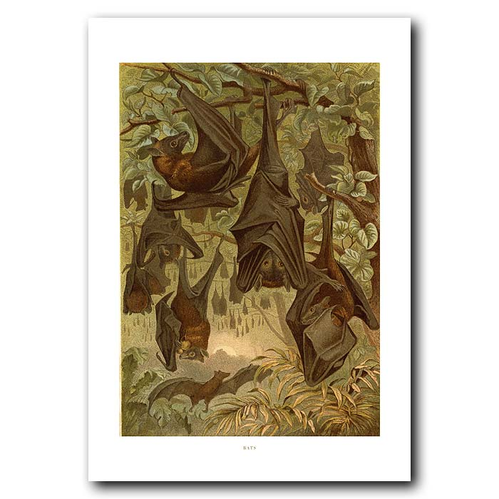 Fine art print for sale. Bats