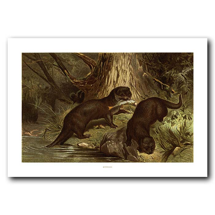 Fine art print for sale. Otters