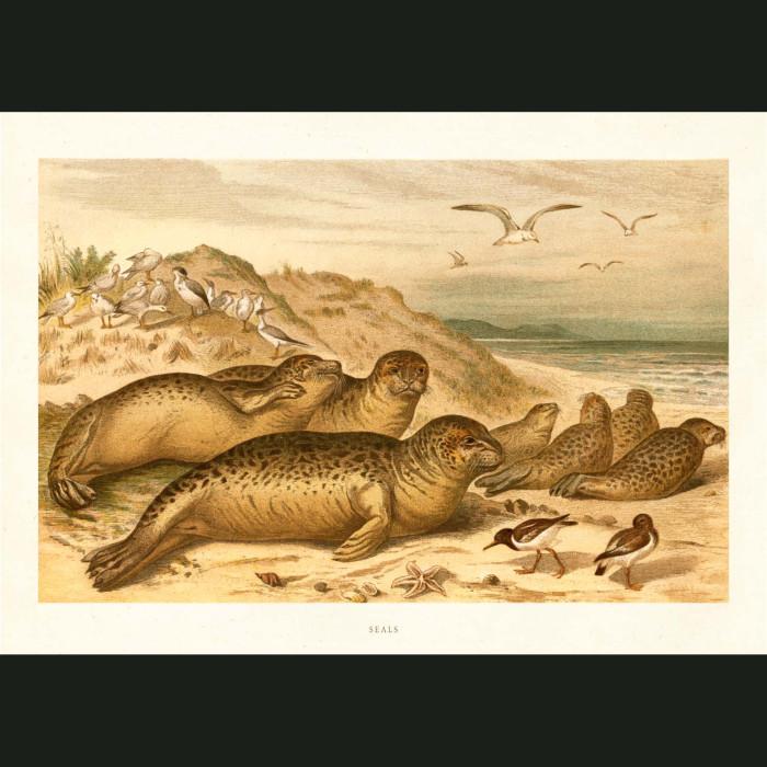 Fine art print for sale. Seals On A Beach
