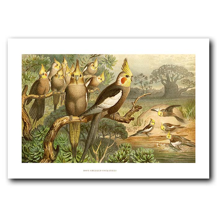 Fine art print for sale. Rosy-Cheeked Cockatiels