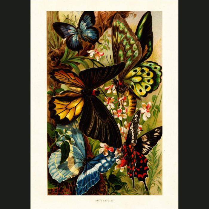 Fine art print for sale. Butterflies