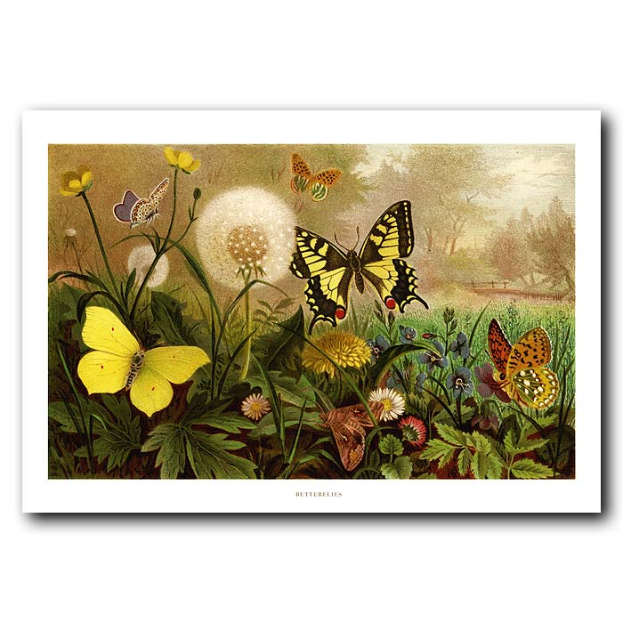 Fine art print for sale. Swallowtail Butterfly & Dandelion