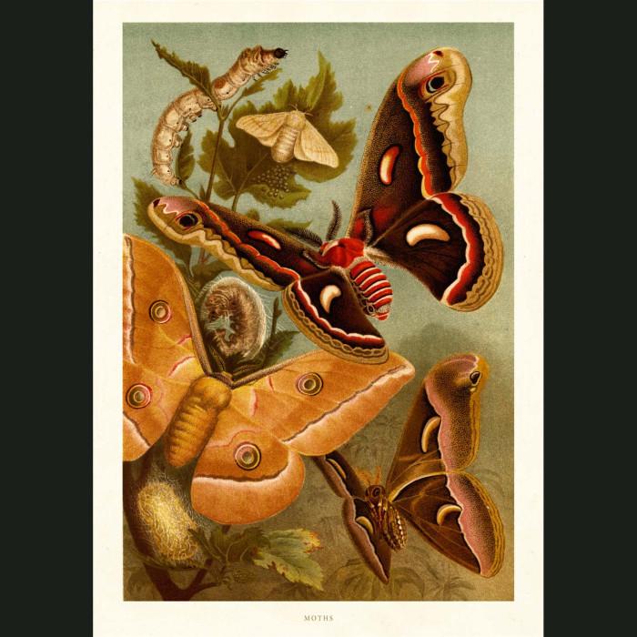 Fine art print for sale. Moths