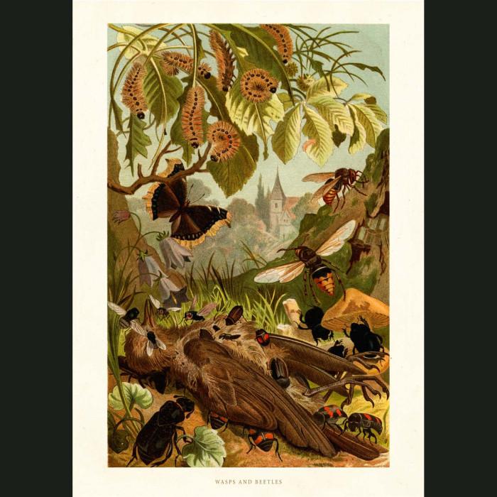 Fine art print for sale. Wasps & Beetles
