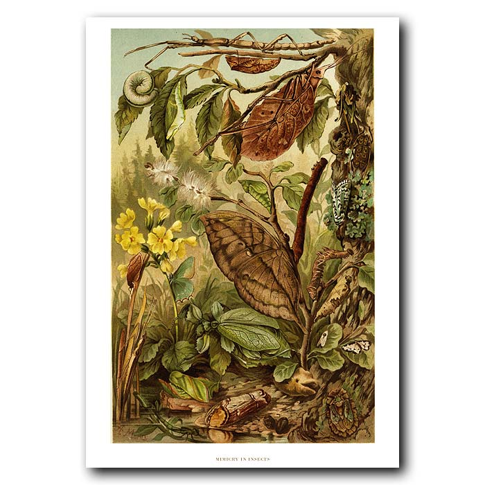 Fine art print for sale. Insect Camouflage