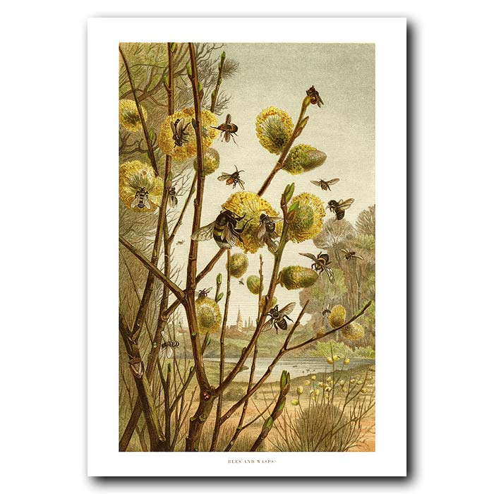 Fine art print for sale. Bees & Wasps