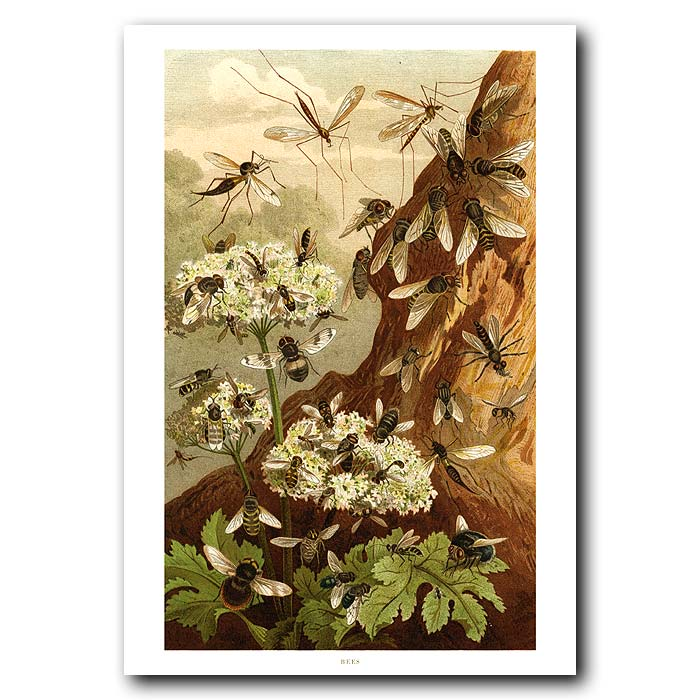 Fine art print for sale. Bees On Wild Flowers