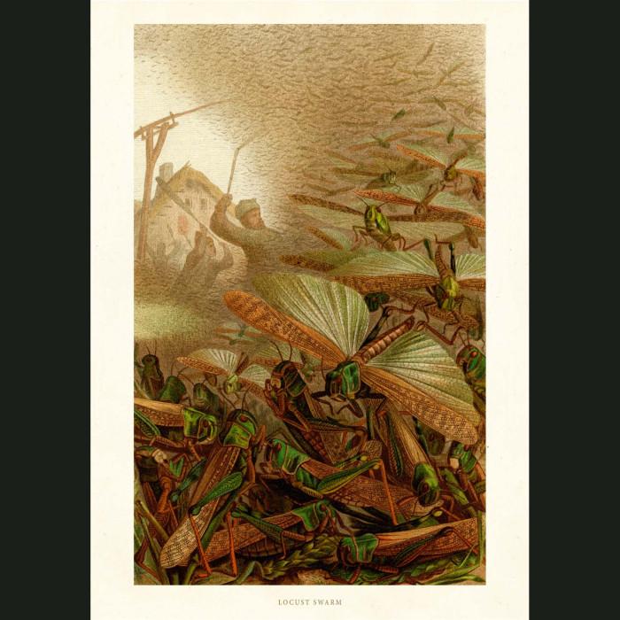 Fine art print for sale. Locust Swarm