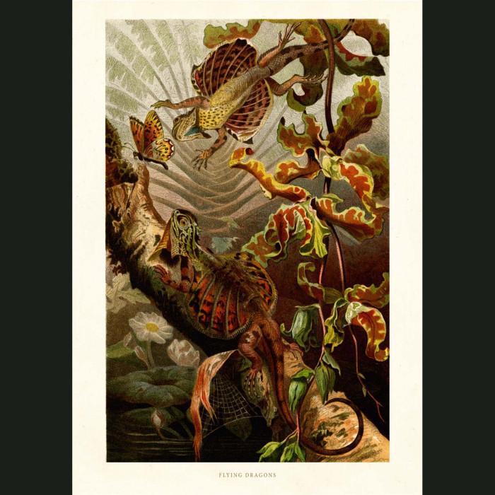 Fine art print for sale. Flying Dragon Lizard
