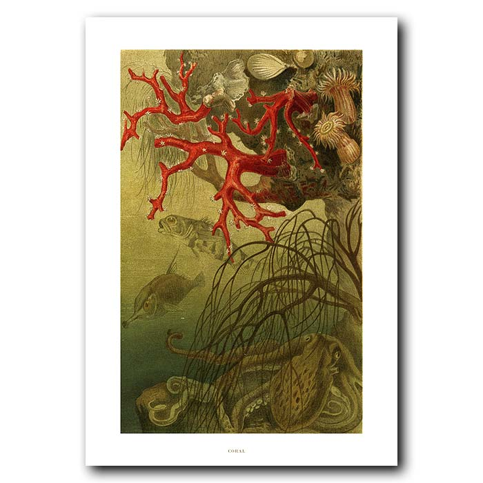Fine art print for sale. Red Coral