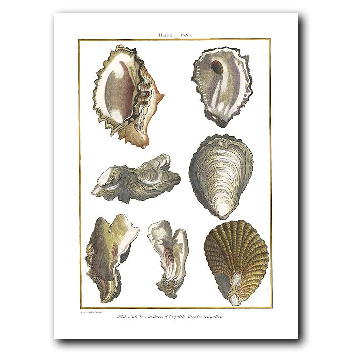 Fine art print for sale. Oyster Seashells