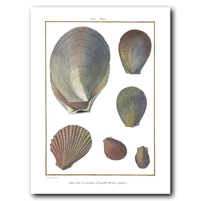 Fine art print for sale. Scallop Seashells (I)