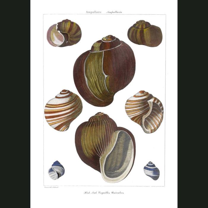 Fine art print for sale. Apple Snail Shells