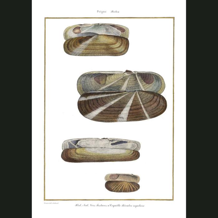 Fine art print for sale. Razor Seashells