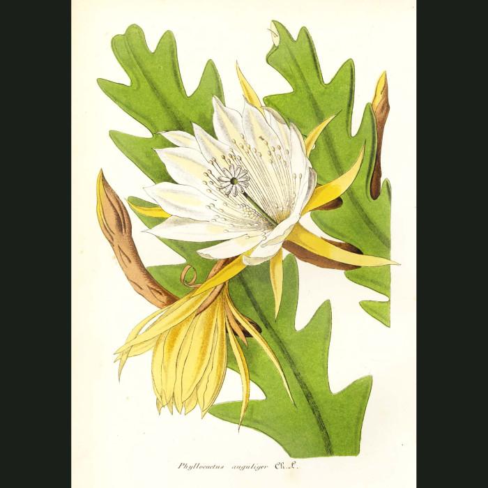 Fine art print for sale. Moon Cactus