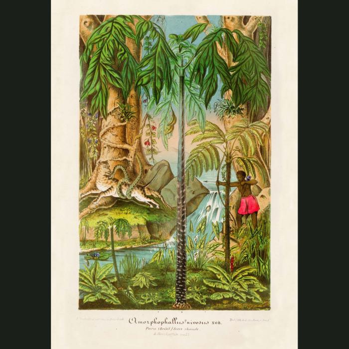 Fine art print for sale. Forest Scene in Brazil