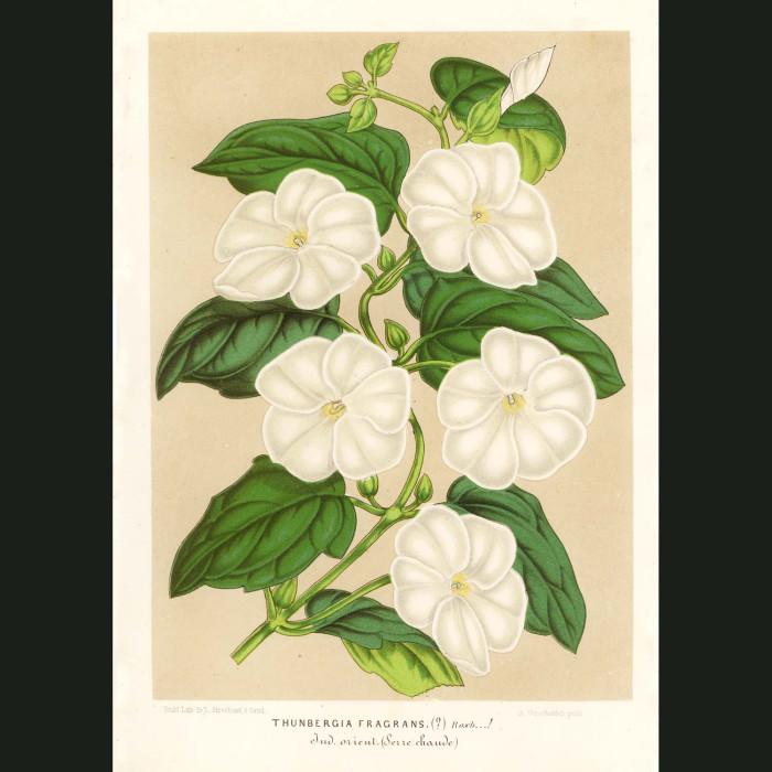 Fine art print for sale. Sweet Clock Vine