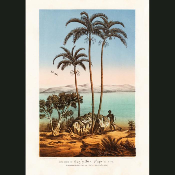 Fine art print for sale. Solitaire Palm