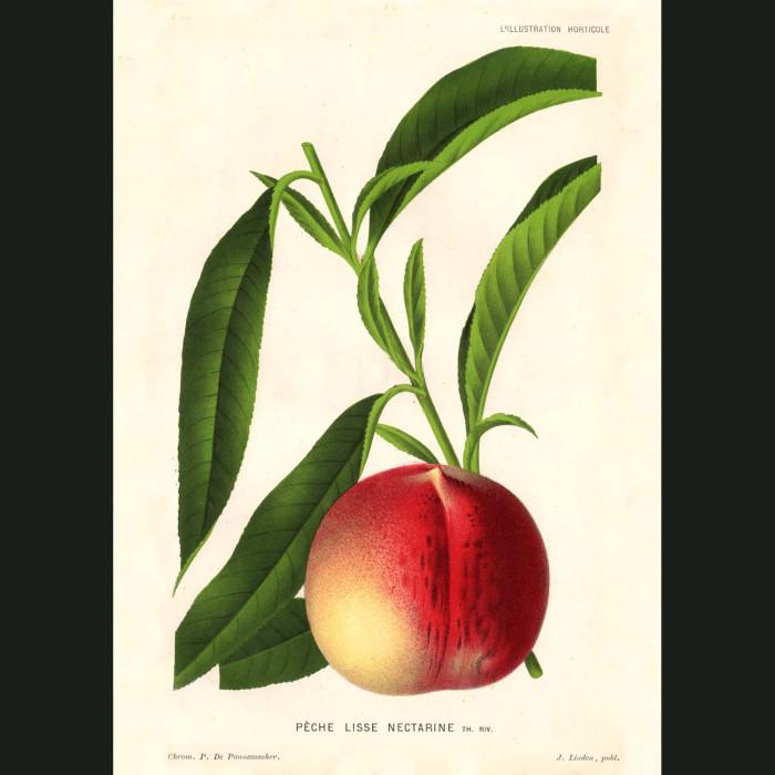 Fine art print for sale. Peach