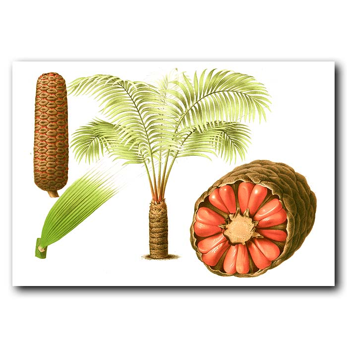 Fine art print for sale. Cycad and Seeds