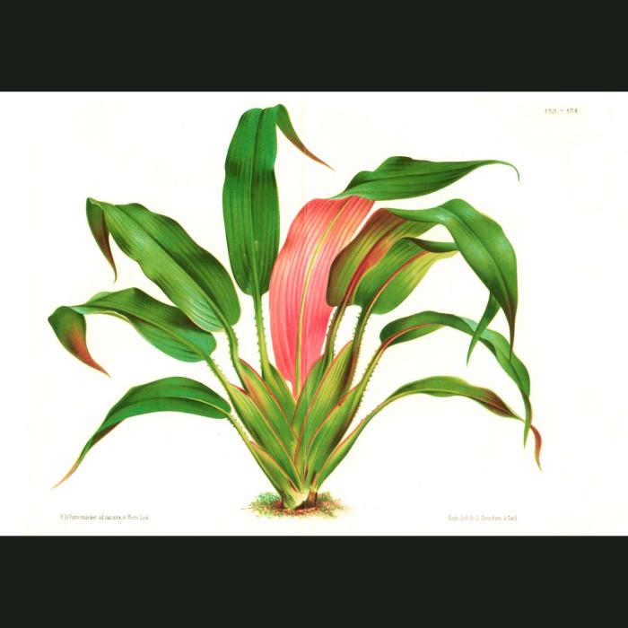 Fine art print for sale. Pandanus