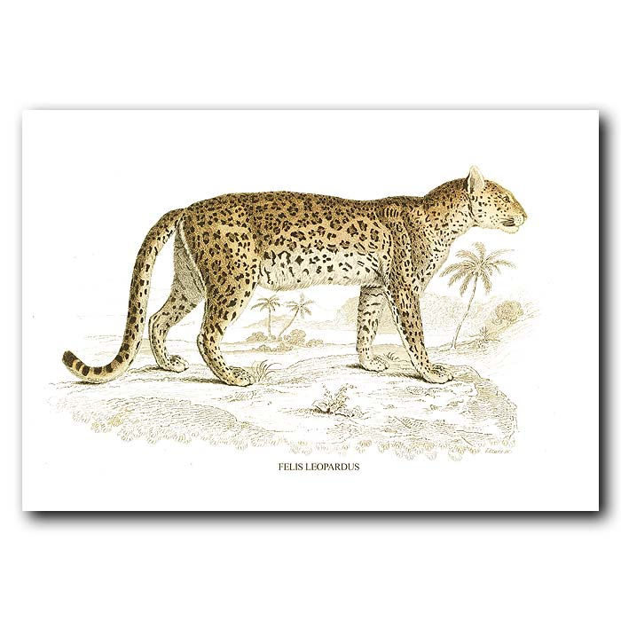 Fine art print for sale. Leopard