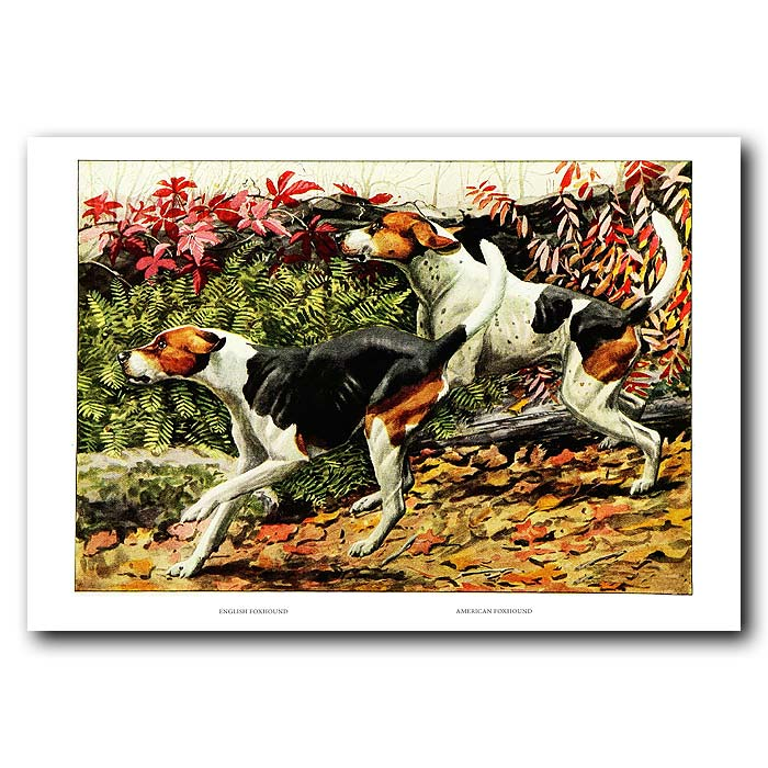 Fine art print for sale. American Foxhound And English Foxhound