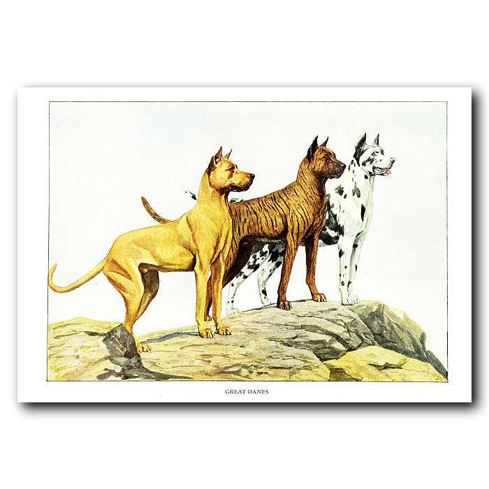 Fine art print for sale. Great Dane Dogs