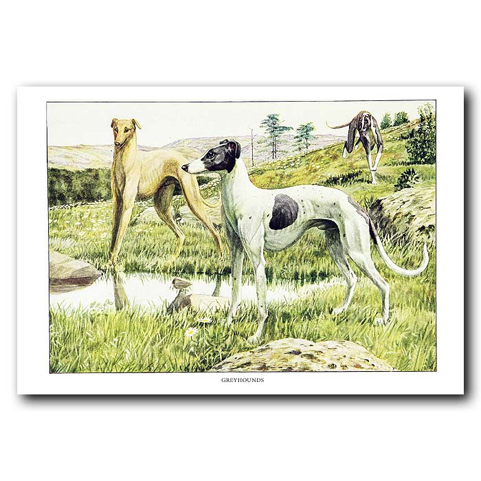 Fine art print for sale. Greyhound Dogs