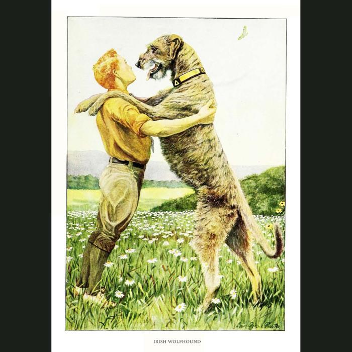 Fine art print for sale. Irish Wolfhound