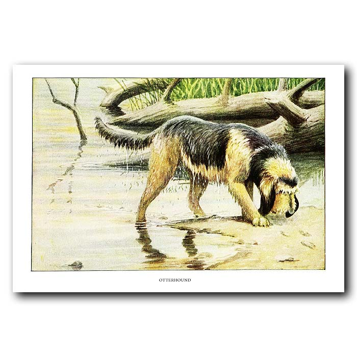 Fine art print for sale. Otterhound