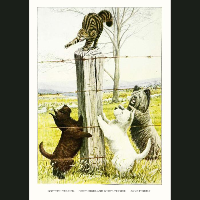 Fine art print for sale. Terrier Dogs - Skye,Scottish,West Highland