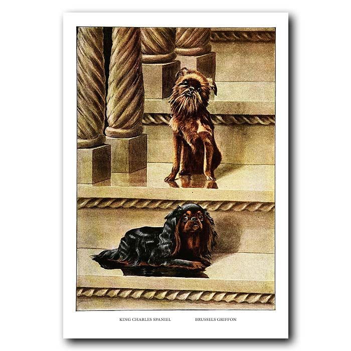 Fine art print for sale. King Charles Spaniel And Brussels Griffon