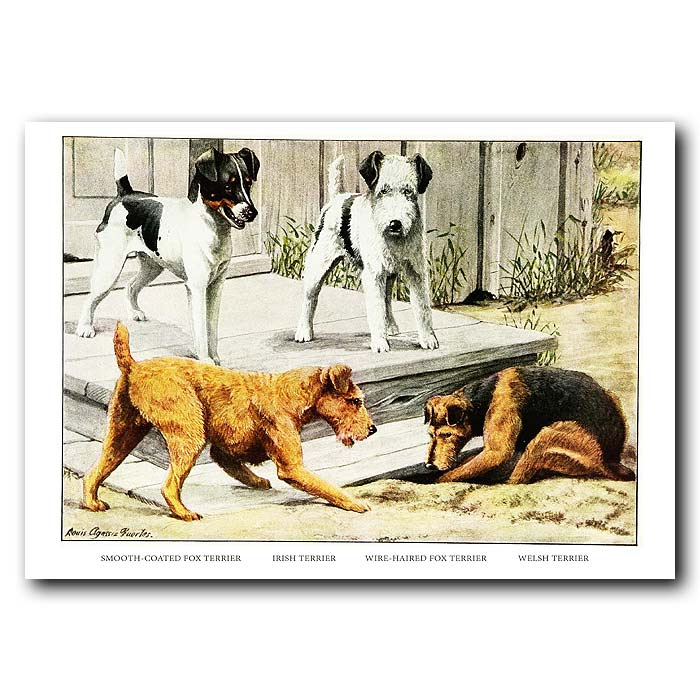 Fine art print for sale. Terrier Dogs - Fox, Irish,Wire And Welsh